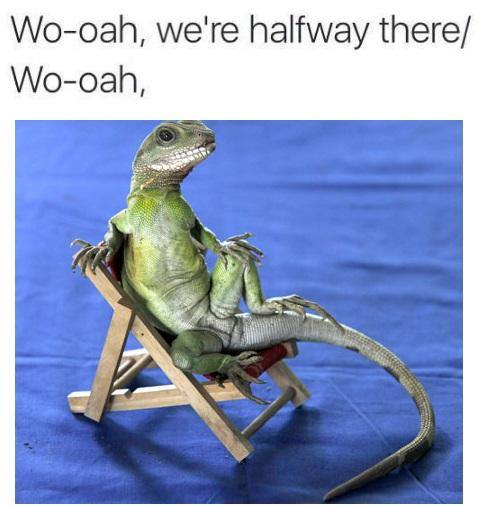 lizard-on-a-chair